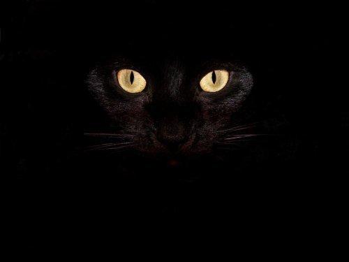 Почему кот стал писать не в лоток - 6a5